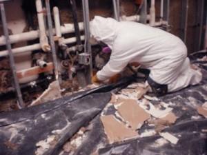 mold investigation